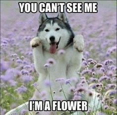 me:yes i can dog:no u can't me:yes i can dog:NO U CANT I SAY U CANT SO THEREFORE U CAAAAAAAAAAAAANT!!!!!!!!! me:YES I CAN U ARE A LARGE DOG AND THAT'S A SMALL FLOWER SO THEREFORE I CAAAAAAAAAAAAAAAAAAAAAAAAAAAAAAAAAAAAAAAAAAAAAAAAAAN!!!!!!!!!!! HA I BET U!!!!!!!!!!