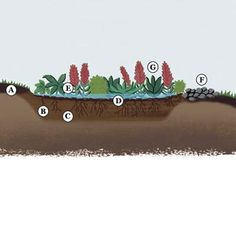 Anatomy of a rain garden, designed to deal with storm water and look good, too!   Illustration: Annie Bissett   thisoldhouse.com