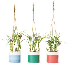 Image result for hygge plants