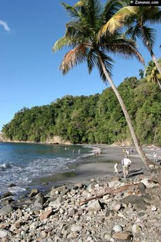 Anse Couleuvre - Martinique. A volcanic beach near Mount Pelé. Caribbean.