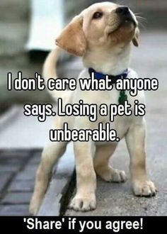 45 Best Dogs images in 2019 | Pets, Cute dogs, Doggies