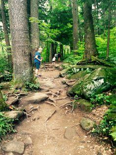Trillium Gap Trail near Gatlinburg, TN