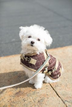 Baxter - one of the most stylish pets at NY Fashion Week
