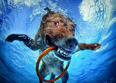 Seth Casteel: Hunde unter Wasser #hund #urlaub #reisen #wasser