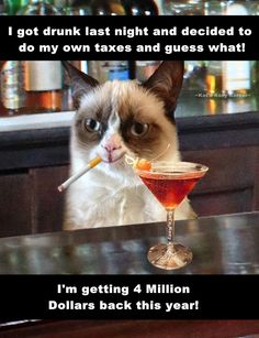 Tax Return Cat Meme
