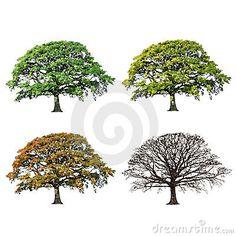 Oak Tree Abstract Four Seasons