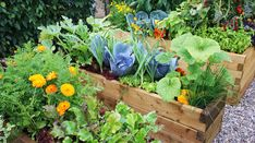 Beautiful gardens - Practical tips and inspiration in 110 pictures - Garden Design Ideas Perennial Vegetables, Growing Vegetables, Edible Garden, Easy Garden, Amazing Gardens, Beautiful Gardens, Small Garden Plans, Landscape Maintenance, Professional Landscaping