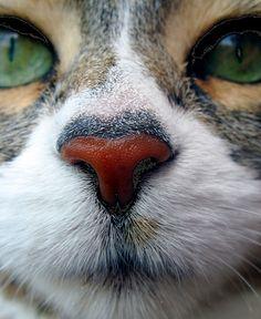 .cat  ULTRA CLOSE UP.