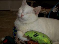Blind Cat Rescue - Popcorn