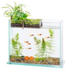http://www.amazon.co.jp/Aquaterior/アクアテリア-アクアテリア-メダカ用-S300(水槽と水耕栽培プランターのセット)/dp/B01C9UMGLO/ref=pd_sim_sbs_21_3?ie=UTF8