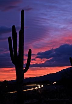 Light Trails at Sunrise 2 :: Saguaro Pictures