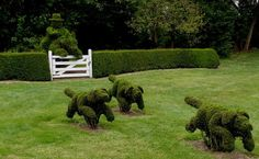 Harvey Smith Ladew II was an American topiary enthusiast, and a fox hunting enthusiast, who created the Ladew Topiary Gardens in Monkton, Maryland. Topiary Garden, Topiary Trees, Garden Hedges, Love Garden, Garden Art, Garden Ideas, Dream Garden, Garden Whimsy, Plum Pretty Sugar