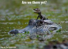 East Texas Gators and Wildlife Park in Grand Saline, TX