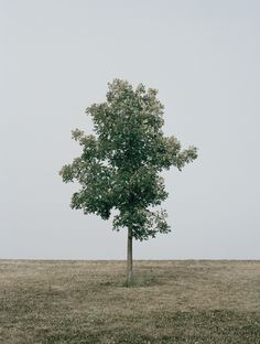 lonely tree by daniel seung lee