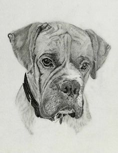 Pet portrait custom portrait drawn from your by DGHdrawings