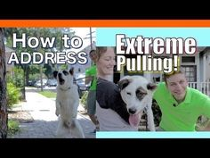 EXTREME LEASH PULLING, BARKING, LUNGING and JUMPING! Train your Dog to Walk on a Leash HUMANELY - YouTube