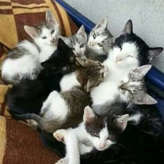 Momma loving her kitties