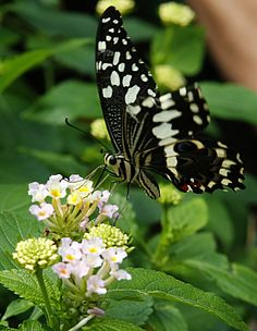 Butterfly  http://stores.ebay.com/crazy-weekly-discounts