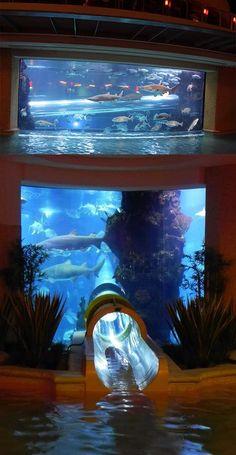 Water slide at the Golden Nugget, Las Vegas. Goes through a shark tank.