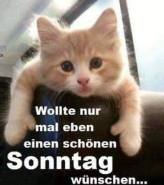 a picture for & # s heart & # Booooah.jpg & # from flea. One of 1014 files in the category & # good-morning-pictures & # on FUNPOT. Saturday Morning Quotes, Good Morning Funny, Good Morning Picture, Morning Humor, Good Morning Quotes, Cat Quotes, Girl Quotes, Funny Quotes, Sunday Pictures