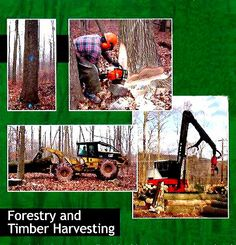 Forestry management at Lapp Lumber. Paradise PA 717-442-4116