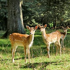 Episode 209: Critter Control - Growing A Greener World TV --- has information about deer fence construction around 9:00. Looks promising!