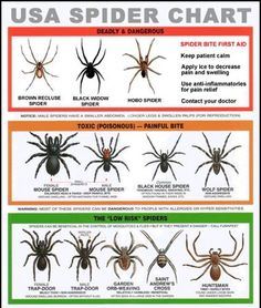 What to do about all the Spiders around your home!
