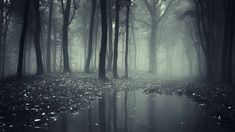 Creepy Dark Forest HD Wallpapers - High Definition Wallpapers  And a lot of others on the site !