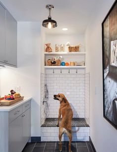 Amazing dog room dedicated to doggy features gray flat front cabinets with under cabinet lighting as well as a rustic wood and rope tray filled with doggy toys.