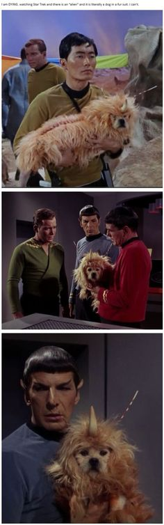 """I am DYING. watching Star Trek and there is an ""alien"" and it is literally a dog in a fur suit."" - Natalie (thispoorunfortunatesoul.tumblr.com)"