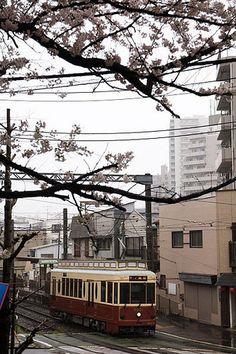 Streetcar and Cherry blossom 桜と都電 cherryblossom streetcar toden 都電荒川線 都電 桜 サクラ tokyo