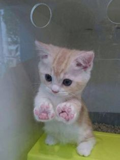 子猫 [ID:45111154] の画像。見やすい!探しやすい!待受,デコメ,お宝画像も必ず見つかるプリ画像!!