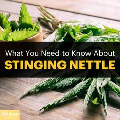Stinging nettle - Dr. Axe http://www.draxe.com #health #holistic #natural