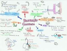 mapamental-respiracao-comparada-bio Mais