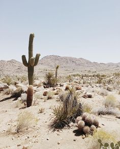 Travel Guide to Joshua Tree, California | Almost Makes Perfect