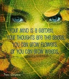 "Divine Spark:  ""Your #mind is a garden; your #thoughts are the seeds. You can grow flowers, or you can grow weeds."""