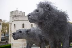 Lifelike Galvanized Wire Animal Sculptures by Kendra Haste  http://www.thisiscolossal.com/2015/02/lifelike-galvanized-wire-animal-sculptures-by-kendra-haste/