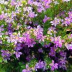 planta falsa Erica Bonsai, Ikebana, Beautiful Flowers, Erica, Plants, Gardening, Dreams, Tv, Interior