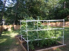 This tomato trellis is made of PVC. You could use bamboo, metal conduit, cedar, or other available materials. This can be secured to the raised bed or put over rebar driven into the ground. It provides good sturdy support that should resist wind damage commonly found on cheap store bought trellises.