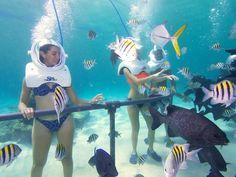 Make fish friends @ Xel Ha park in Tulum, Mexico. Check out the Sea TREK underwater walk!