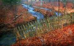Old Fence in Late Autumn,