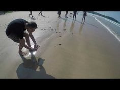 release of the little sea turtles - YouTube Beauty Around The World, Around The Worlds, Sea Turtles, Amazing Places, Sri Lanka, The Good Place, Youtube, Aquatic Turtles, Youtubers