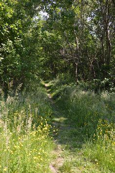 #nature #arbre #paysage #bois #sousbois #foret