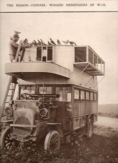 The Pigeon Express: Winged Messengers of War 1915