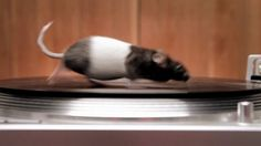 Rodents on Turntables - Live Nation: One of the films we made to play as pre-show entertainment at hundreds of Live Nation concert venues across the country.