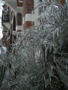 tree after an ice storm  http://www.ramblingtart.com/2012/12/07/ice-sledding-and-rum-hot-chocolate-in-amsterdam/#
