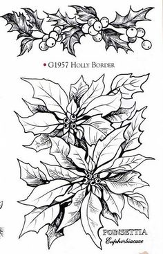 poinsettia coloring pages for adults - photo#15
