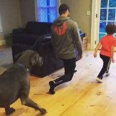 Funny Categories Fuunyy Family workout 😍🐶💪 Source by ktakiernan Funny Animal Videos, Cute Funny Animals, Funny Animal Pictures, Cute Baby Animals, Funny Cute, Funny Dogs, Animals And Pets, Pet Videos, Videos Funny
