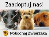 Morawiecki zdetonował kolejną bombę? « Wolne Media Dogs, Animals, Animales, Animaux, Pet Dogs, Doggies, Animal, Animais