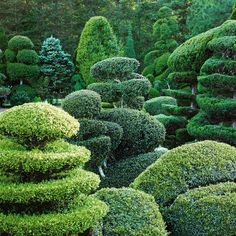 Pearl Fryar Topiary Garden in Bishopville, SC This is awesome!